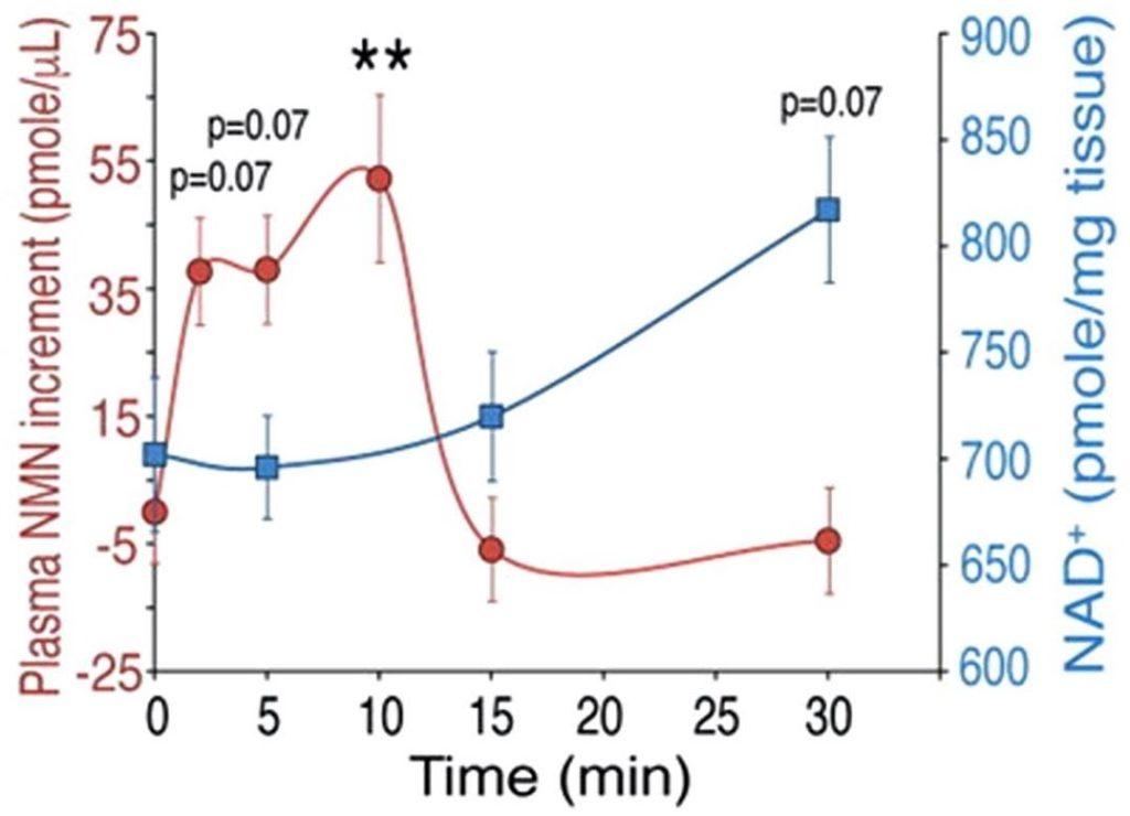NMN and NR bioavailability