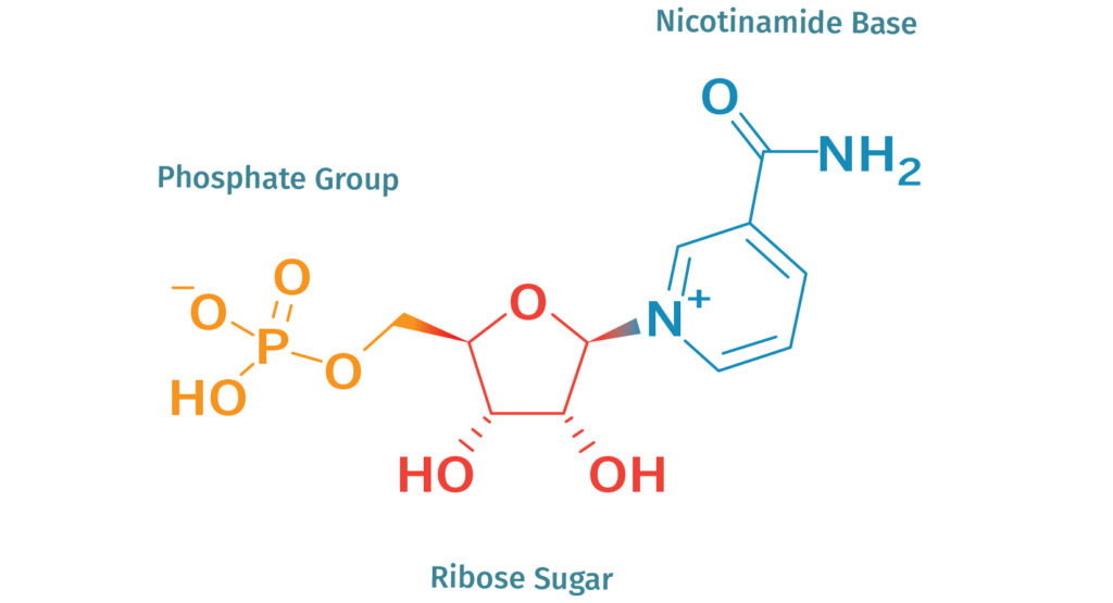 What is NMN? | Nicotinamide Mononucleotide Explained